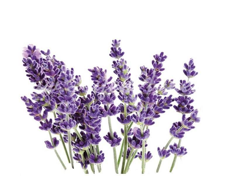 Ätherisches Öl Lavendel » 4,10€ » SeifenPlanet-Onlineshop