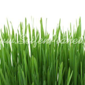 Parfümöl Fresh Gras