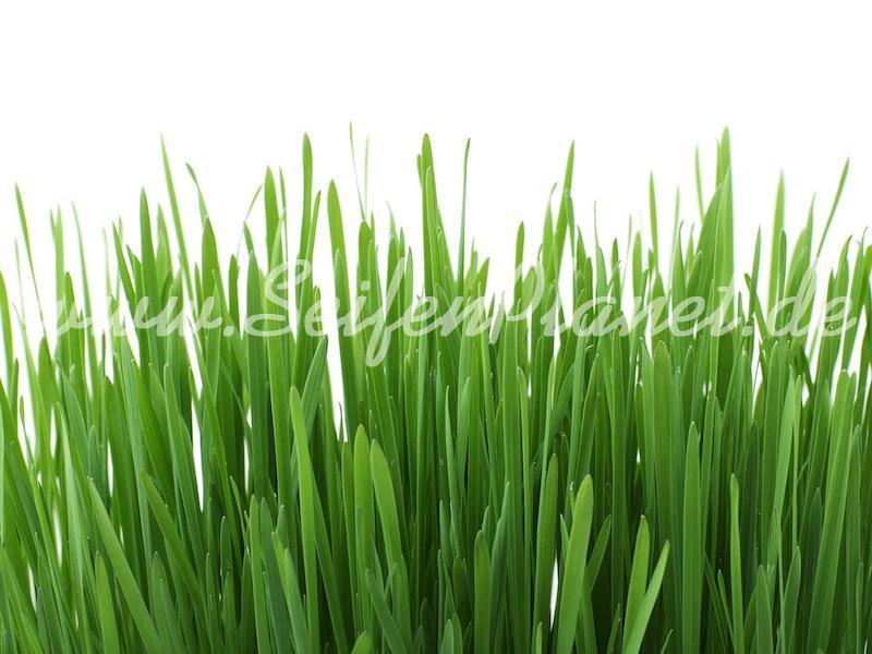 Parfümöl Fresh Gras » 2,85€ » SeifenPlanet-Onlineshop