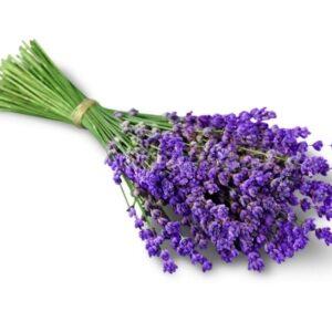 Seifenduft-Öl Lavendel