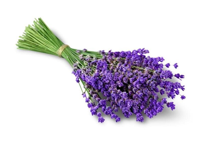 Seifenduft-Öl Lavendel » 4,95€ » SeifenPlanet-Onlineshop