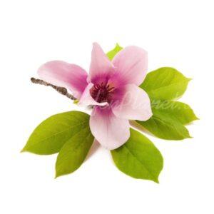 Parfümöl Magnolie 10 ml