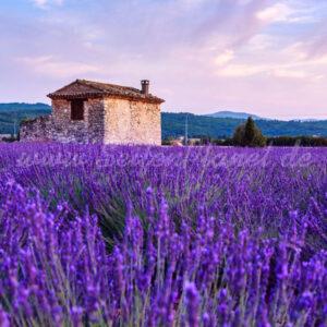 Parfümöl Provence 10 ml