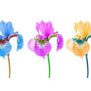 Parfümöl Iris 10 ml