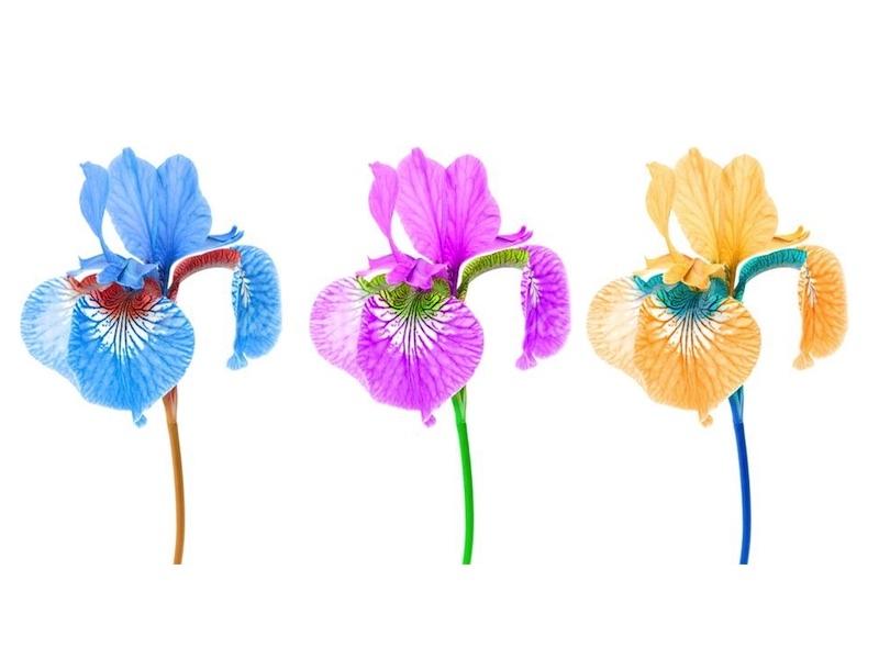 Parfümöl Iris 10 ml » 3,05€ » SeifenPlanet-Onlineshop